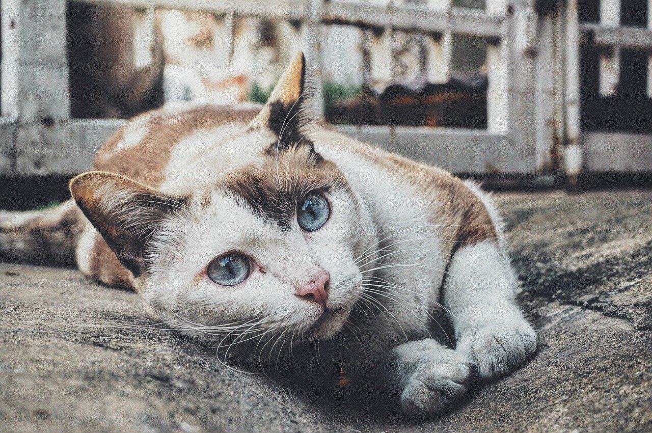 Haustiere und ihre Gerüche – Was kann man tun?
